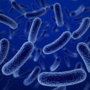 The Bacteria Puzzle